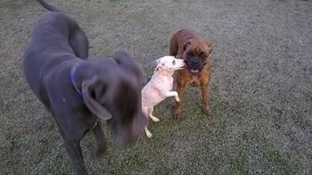 chiens_perso